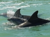 paradise-coast-dolphin-family-with-baby