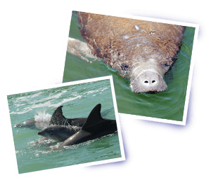 Manatee and dolphin seen on kayaking tour near Cocoa Beach and Orlando